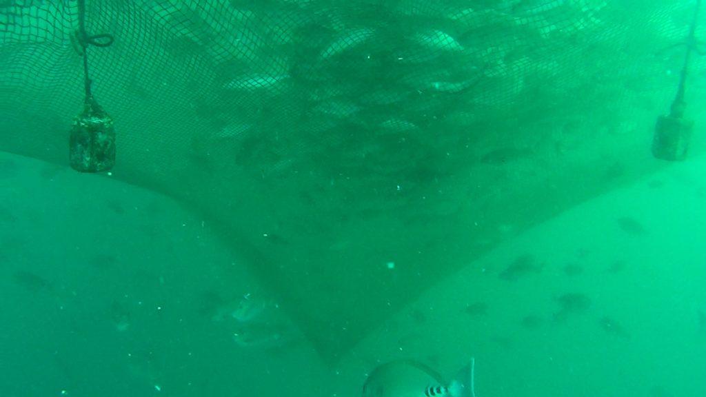 イケス 水中映像