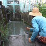 用水路 釣り